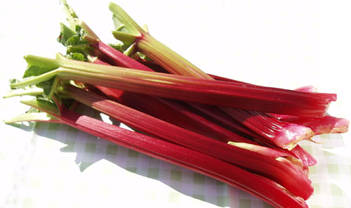 rhubarb - a miracle herb to grow taller